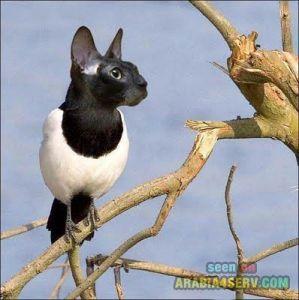 تعرف على الطائر الحيوان