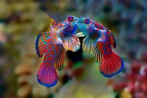 عجائب وغرائب الاسماك